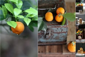 Blood Orange Macarons with Maple Orange Chocolate Pastry Creme