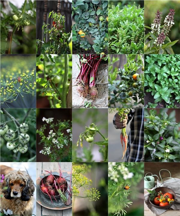 Spring herbs veggies fruits