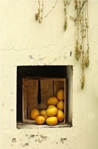 Indian mangoes, Alphonso
