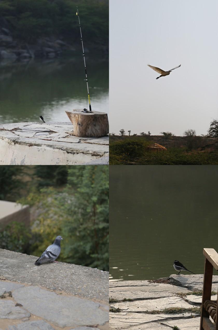 Birds, Lakshman sagar