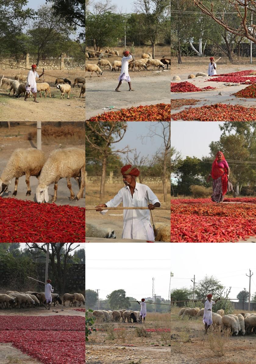 Sheep tales, Spice Market, Lakshman Sagar, Raipur